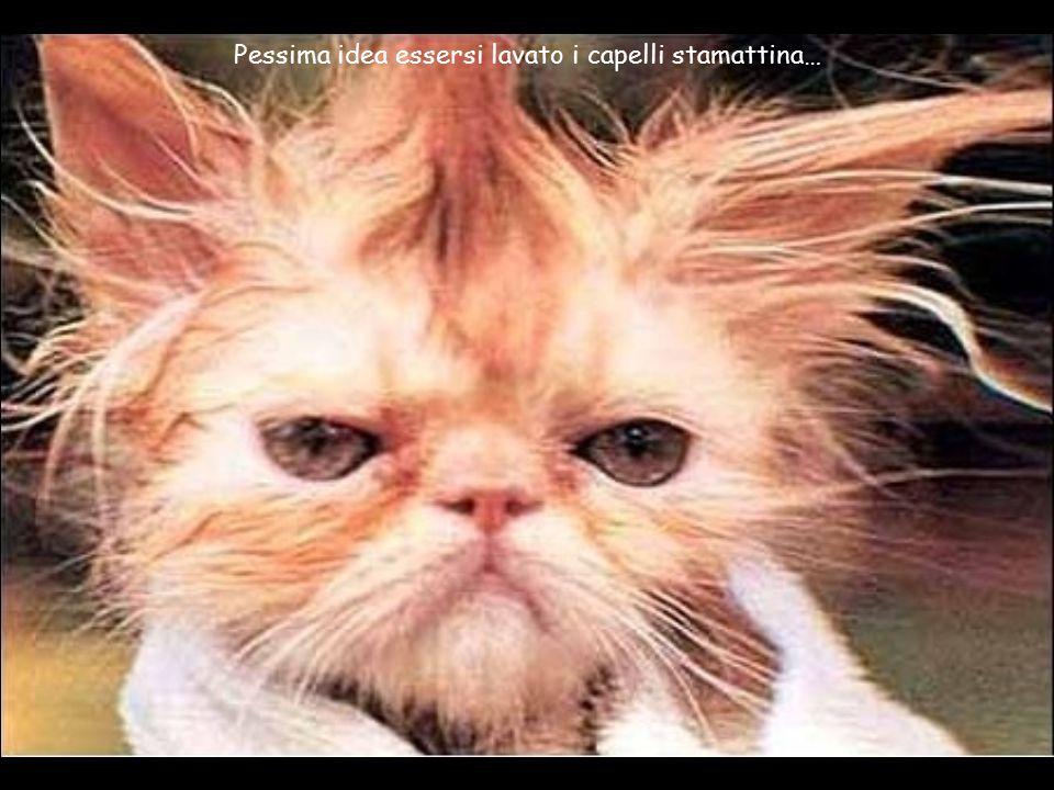 Pessima idea essersi lavato i capelli stamattina…