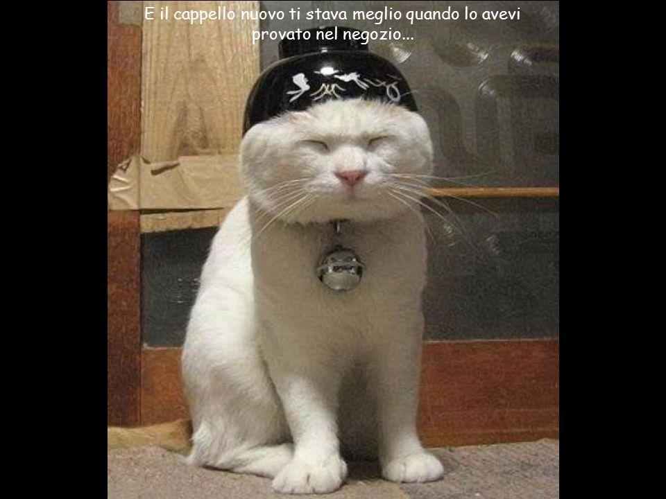 E il cappello nuovo ti stava meglio quando lo avevi provato nel negozio...