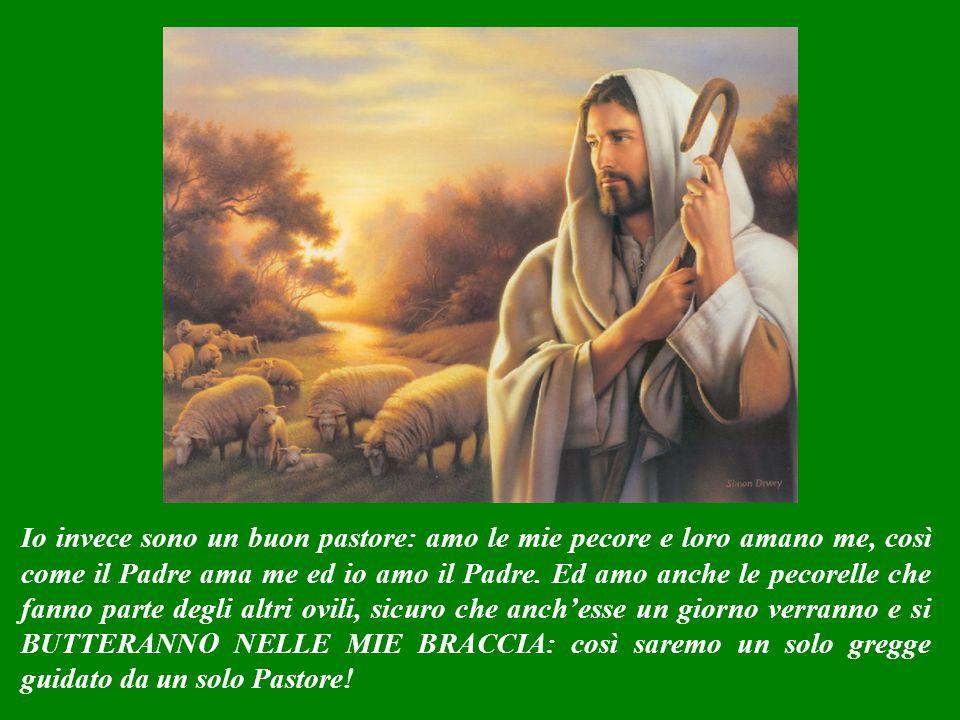 Io infatti sono un buon Pastore, di quelli che amano le loro pecore: e che per esse sono disposti anche a morire. Non sono come quei pastori che quand