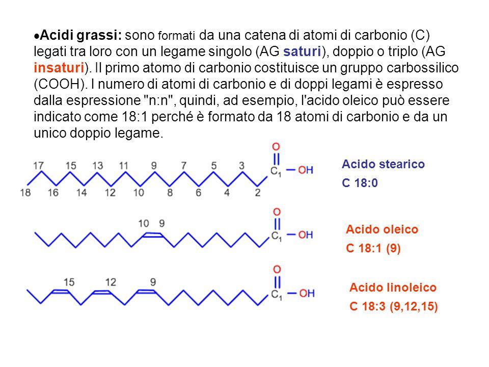 Acido stearico C 18:0 Acido oleico C 18:1 (9) Acido linoleico C 18:3 (9,12,15)  Acidi grassi: sono formati da una catena di atomi di carbonio (C) leg