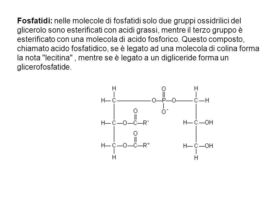 Fosfatidi: nelle molecole di fosfatidi solo due gruppi ossidrilici del glicerolo sono esterificati con acidi grassi, mentre il terzo gruppo è esterifi