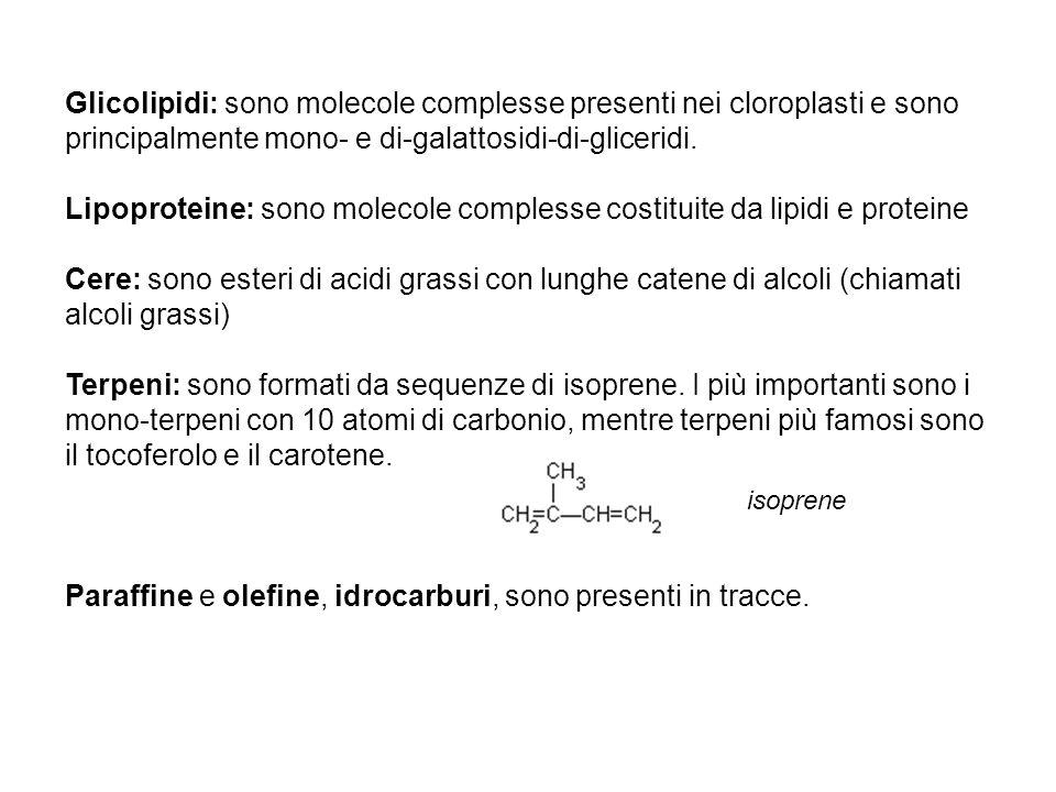 Glicolipidi: sono molecole complesse presenti nei cloroplasti e sono principalmente mono- e di-galattosidi-di-gliceridi. Lipoproteine: sono molecole c