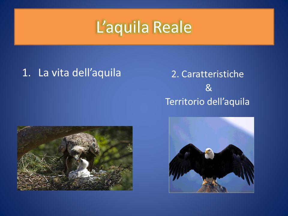 1.La vita dell'aquila 2. Caratteristiche & Territorio dell'aquila