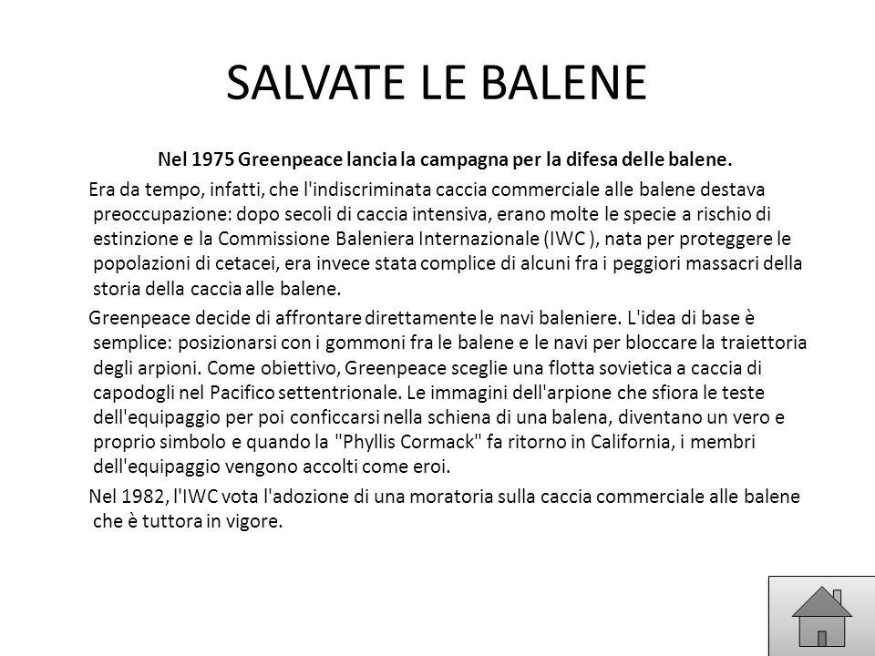 SALVATE LE BALENE Nel 1975 Greenpeace lancia la campagna per la difesa delle balene. Era da tempo, infatti, che l'indiscriminata caccia commerciale al