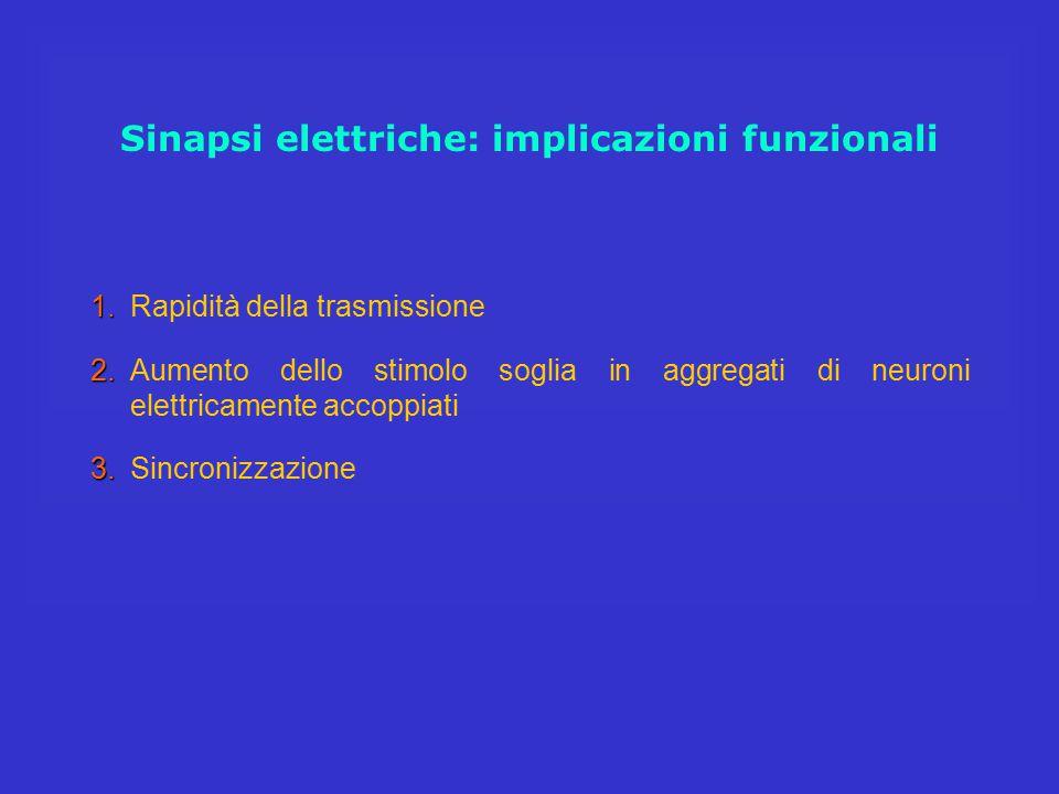 Sinapsi elettriche: implicazioni funzionali 1. 1.Rapidità della trasmissione 2. 2.Aumento dello stimolo soglia in aggregati di neuroni elettricamente