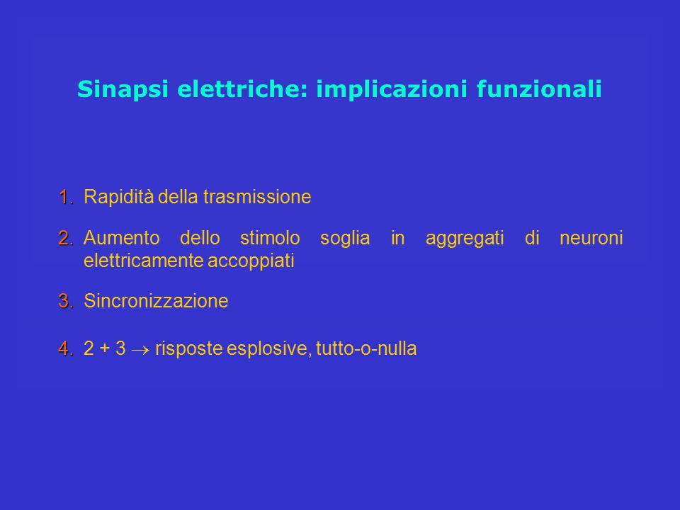 Sinapsi elettriche: implicazioni funzionali 4. 4.2 + 3  risposte esplosive, tutto-o-nulla 1. 1.Rapidità della trasmissione 2. 2.Aumento dello stimolo