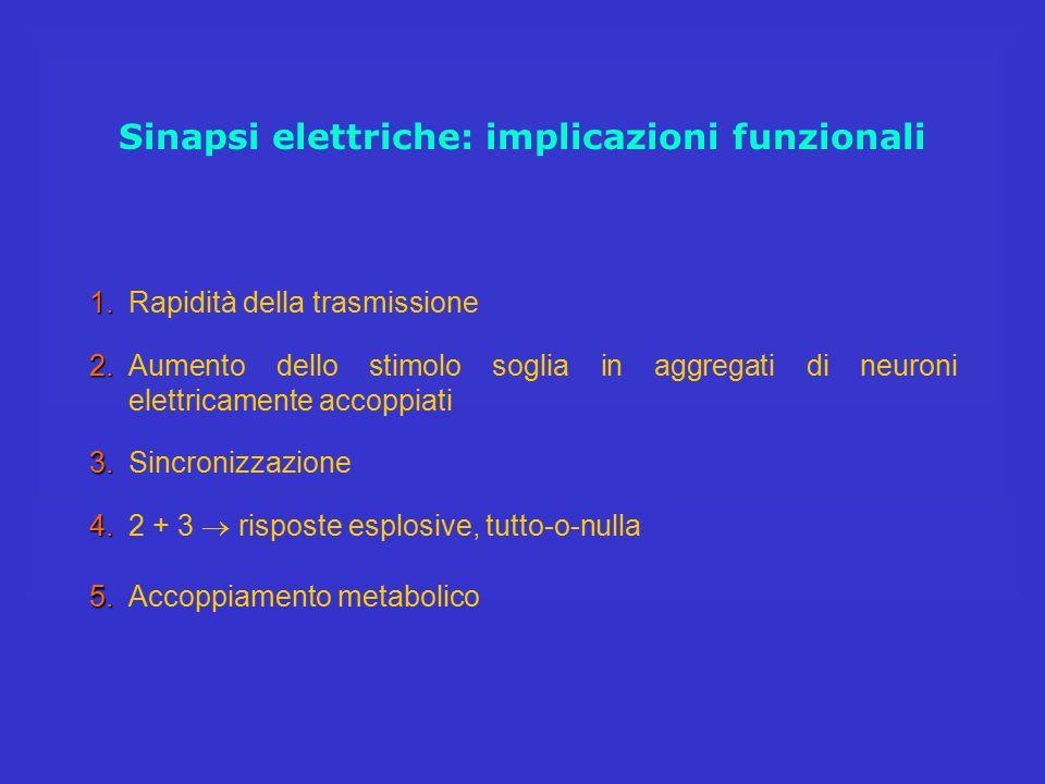 Sinapsi elettriche: implicazioni funzionali 5. 5.Accoppiamento metabolico 1. 1.Rapidità della trasmissione 2. 2.Aumento dello stimolo soglia in aggreg