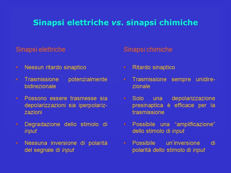 Sinapsi elettriche vs. sinapsi chimiche Sinapsi elettriche Nessun ritardo sinaptico Trasmissione potenzialmente bidirezionale Possono essere trasmesse