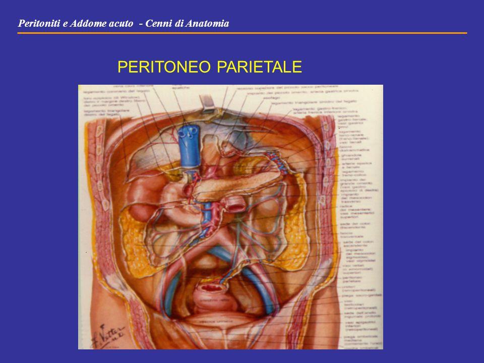 Peritoniti e Addome acuto - Cenni di Anatomia PERITONEO PARIETALE