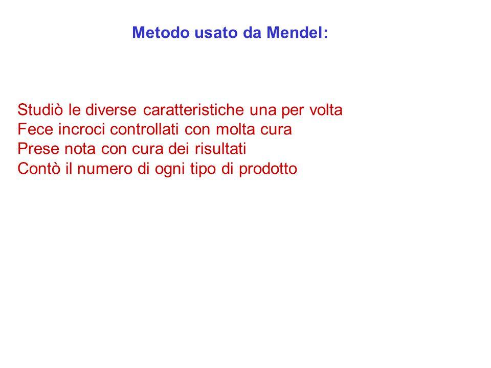 Metodo usato da Mendel: Studiò le diverse caratteristiche una per volta Fece incroci controllati con molta cura Prese nota con cura dei risultati Cont
