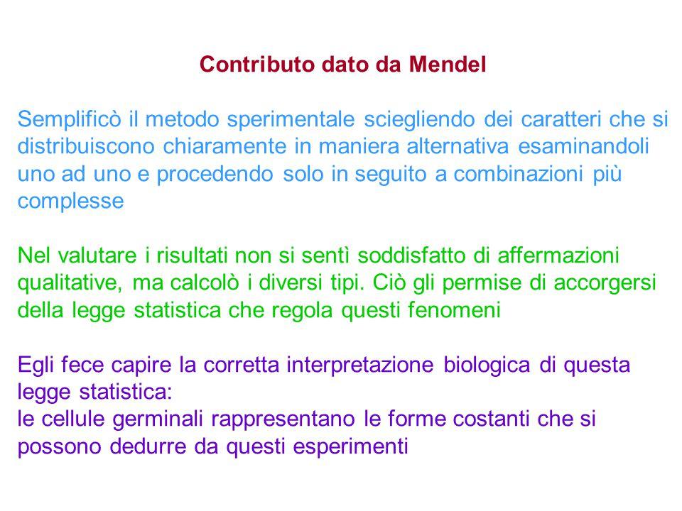 Contributo dato da Mendel Semplificò il metodo sperimentale sciegliendo dei caratteri che si distribuiscono chiaramente in maniera alternativa esamina