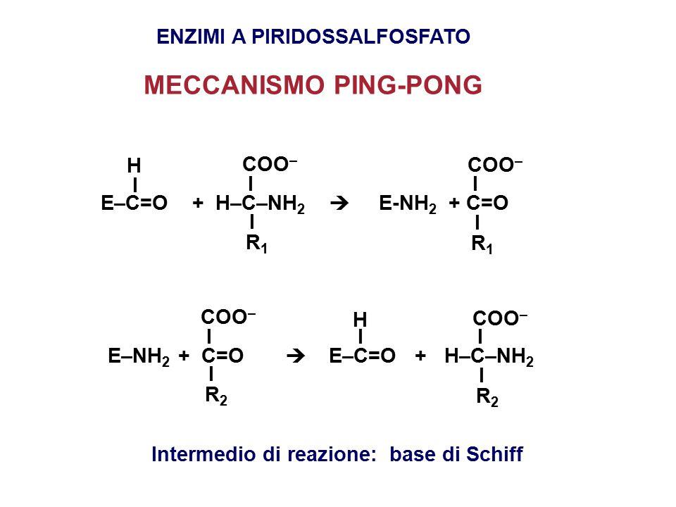 ENZIMI A PIRIDOSSALFOSFATO MECCANISMO PING-PONG E–C=O + H–C–NH 2  E-NH 2 + C=O I I I I I H COO – R1R1 R1R1 E–NH 2 + C=O  E–C=O + H–C–NH 2 I I I I I H COO – R2R2 R2R2 Intermedio di reazione: base di Schiff