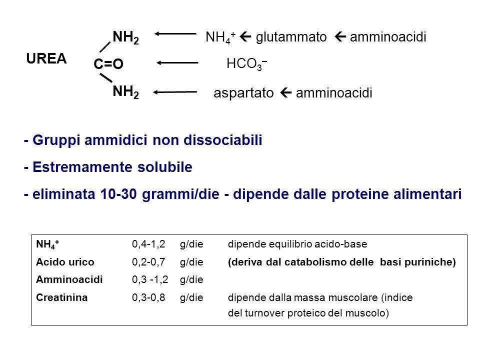 UREA NH 4 +  glutammato  amminoacidi - Gruppi ammidici non dissociabili - Estremamente solubile - eliminata 10-30 grammi/die - dipende dalle proteine alimentari NH 4 + 0,4-1,2 g/die dipende equilibrio acido-base Acido urico 0,2-0,7 g/die (deriva dal catabolismo delle basi puriniche) Amminoacidi0,3 -1,2 g/die Creatinina 0,3-0,8 g/diedipende dalla massa muscolare (indice del turnover proteico del muscolo) C=O NH 2 aspartato  amminoacidi HCO 3 –