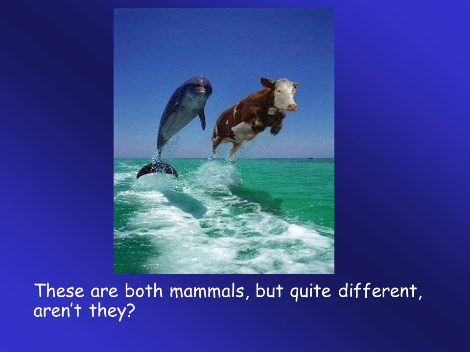 These are both mammals, but quite different, aren't they?