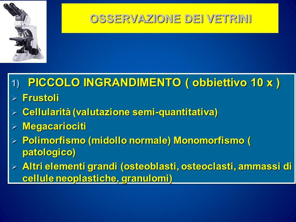 OSSERVAZIONE DEI VETRINI 1) PICCOLO INGRANDIMENTO ( obbiettivo 10 x )  Frustoli  Cellularità (valutazione semi-quantitativa)  Megacariociti  Polimorfismo (midollo normale) Monomorfismo ( patologico)  Altri elementi grandi (osteoblasti, osteoclasti, ammassi di cellule neoplastiche, granulomi) 1) PICCOLO INGRANDIMENTO ( obbiettivo 10 x )  Frustoli  Cellularità (valutazione semi-quantitativa)  Megacariociti  Polimorfismo (midollo normale) Monomorfismo ( patologico)  Altri elementi grandi (osteoblasti, osteoclasti, ammassi di cellule neoplastiche, granulomi)