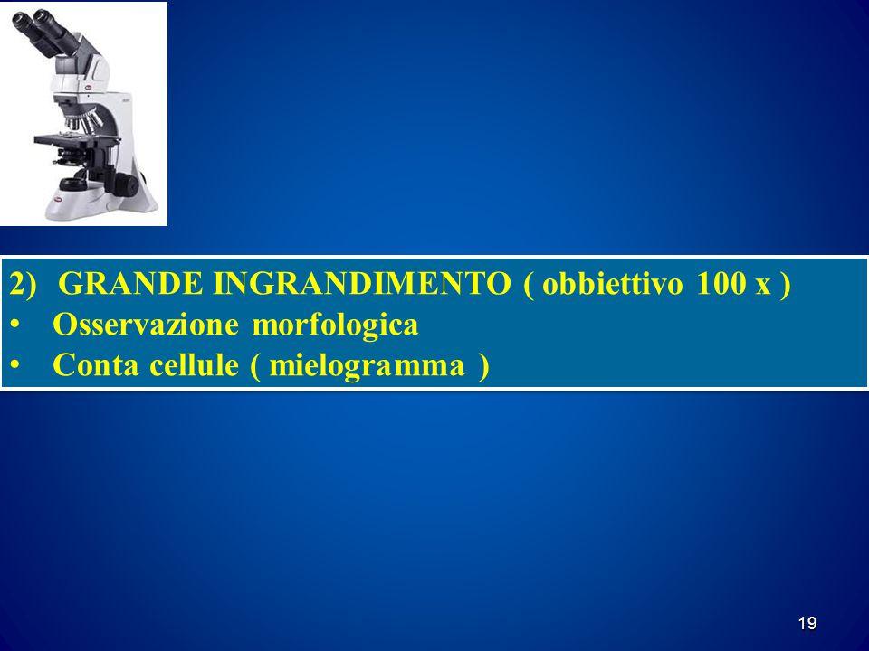 19 2)GRANDE INGRANDIMENTO ( obbiettivo 100 x ) Osservazione morfologica Conta cellule ( mielogramma ) 2)GRANDE INGRANDIMENTO ( obbiettivo 100 x ) Osservazione morfologica Conta cellule ( mielogramma )