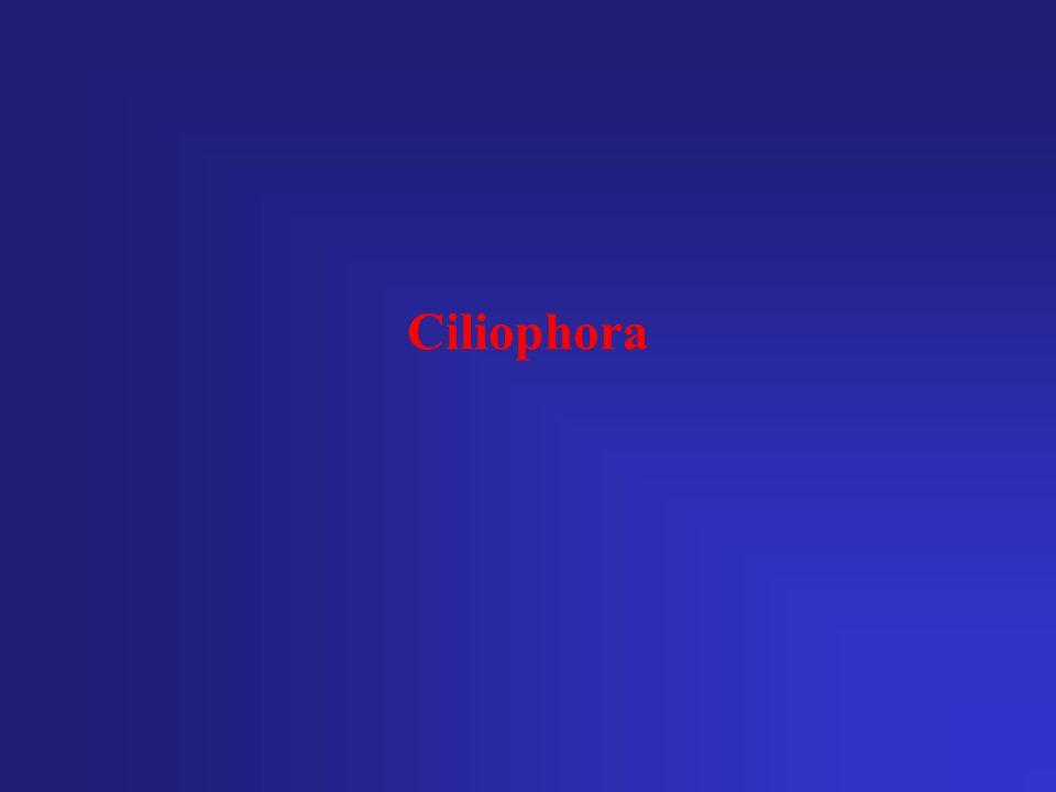 Ciliophora