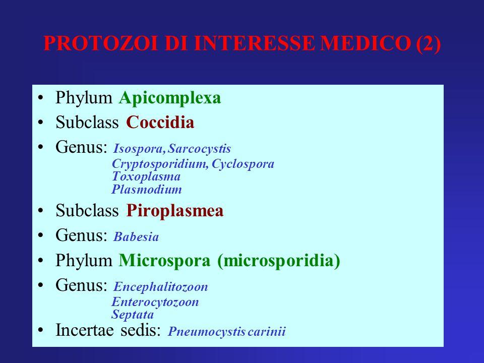 PROTOZOI DI INTERESSE MEDICO (2) Phylum Apicomplexa Subclass Coccidia Genus: Isospora, Sarcocystis Cryptosporidium, Cyclospora Toxoplasma Plasmodium S