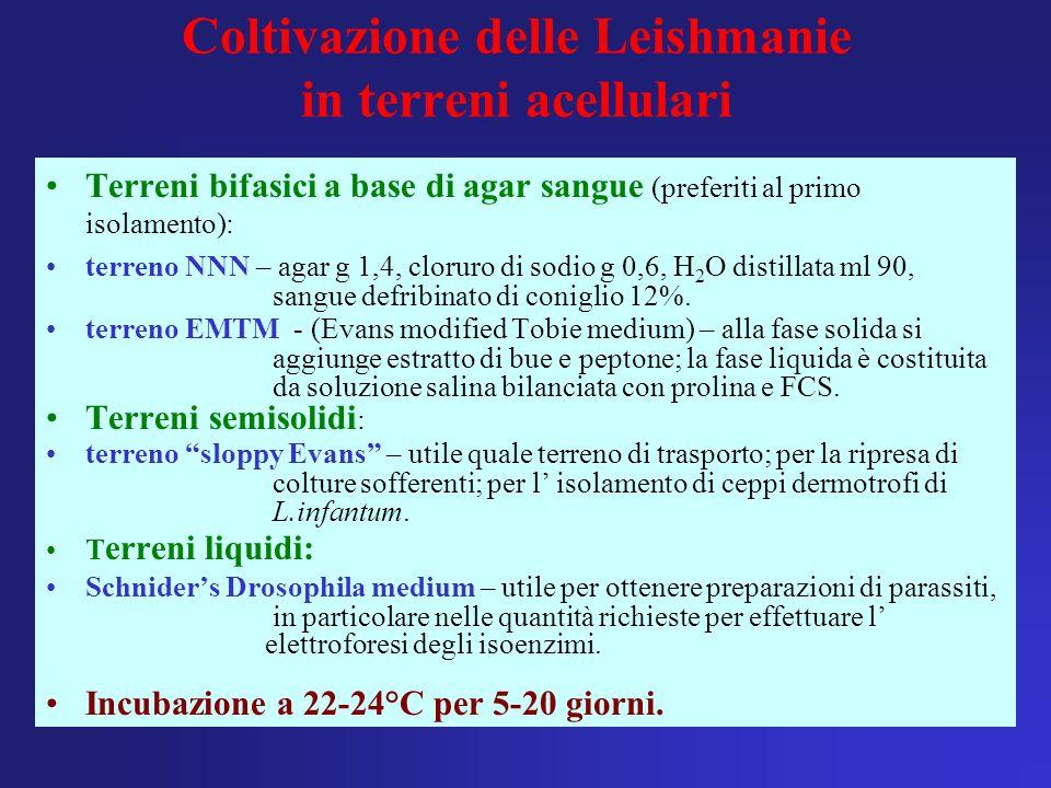 Coltivazione delle Leishmanie in terreni acellulari Terreni bifasici a base di agar sangue (preferiti al primo isolamento): terreno NNN – agar g 1,4,
