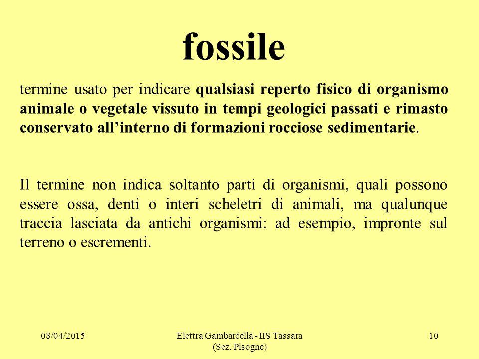 fossile termine usato per indicare qualsiasi reperto fisico di organismo animale o vegetale vissuto in tempi geologici passati e rimasto conservato all'interno di formazioni rocciose sedimentarie.