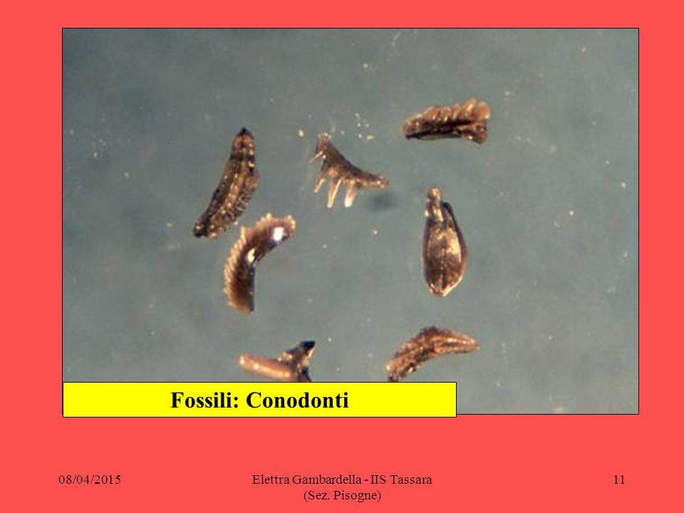 Fossili: Conodonti 08/04/201511Elettra Gambardella - IIS Tassara (Sez. Pisogne)
