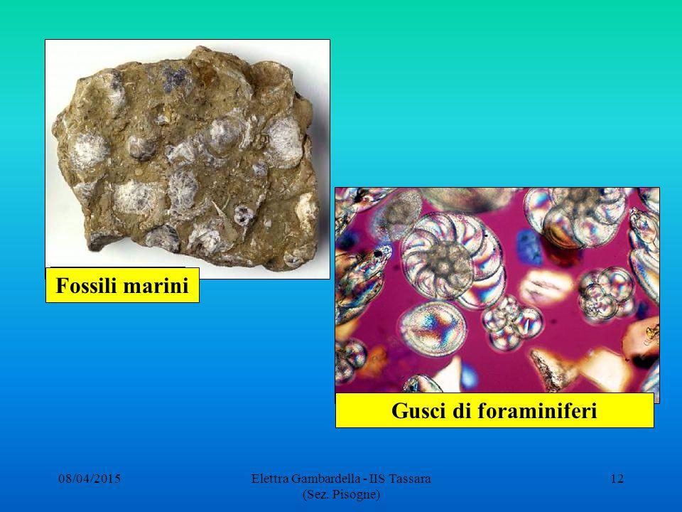 Fossili marini Gusci di foraminiferi 08/04/201512Elettra Gambardella - IIS Tassara (Sez. Pisogne)
