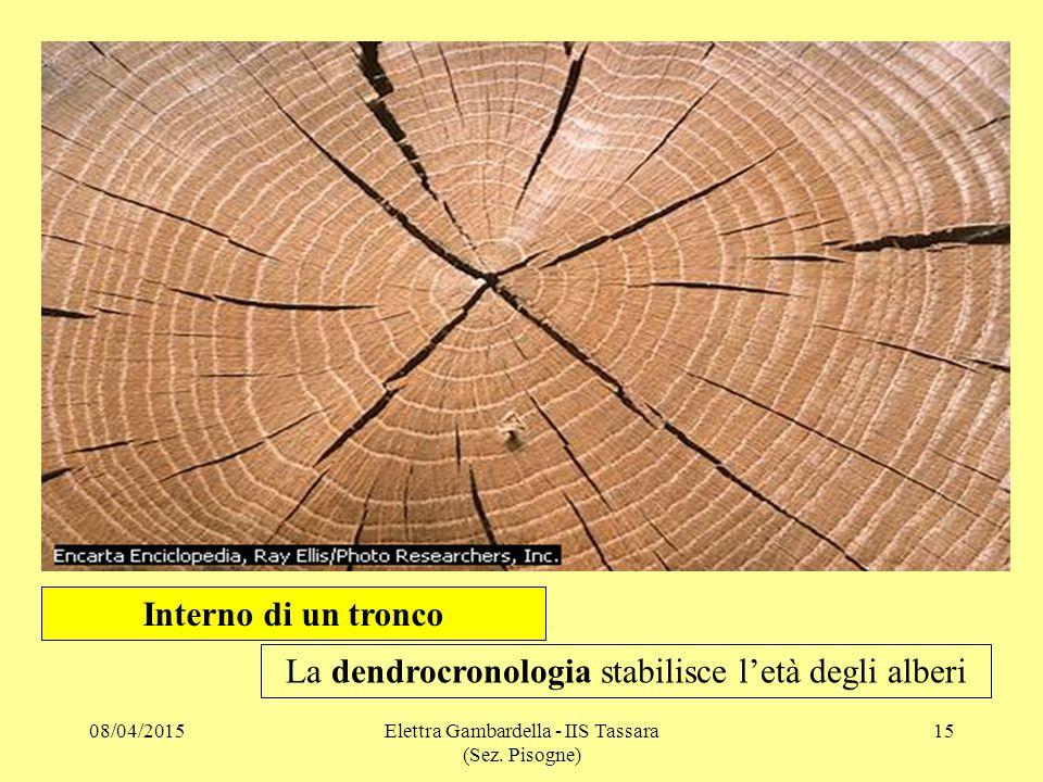 Interno di un tronco La dendrocronologia stabilisce l'età degli alberi 08/04/201515Elettra Gambardella - IIS Tassara (Sez. Pisogne)