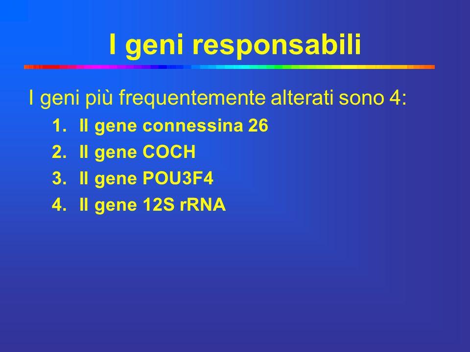 I geni responsabili I geni più frequentemente alterati sono 4: 1.Il gene connessina 26 2.Il gene COCH 3.Il gene POU3F4 4.Il gene 12S rRNA