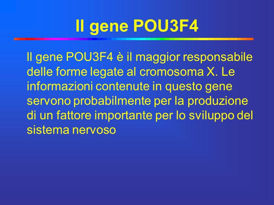 ll gene POU3F4 ll gene POU3F4 è il maggior responsabile delle forme legate al cromosoma X. Le informazioni contenute in questo gene servono probabilme