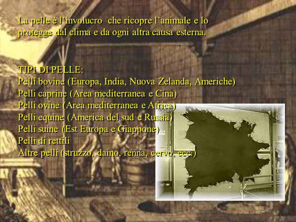 TIPI DI PELLE: Pelli bovine (Europa, India, Nuova Zelanda, Americhe) Pelli caprine (Area mediterranea e Cina) Pelli ovine (Area mediterranea e Africa)