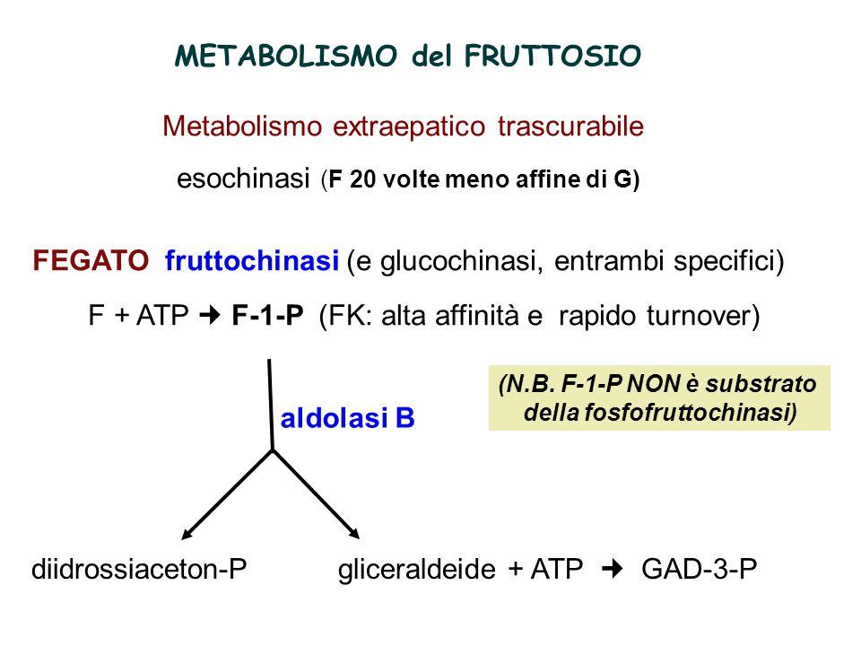 1.Carenza fruttochinasi: FRUTTOSURIA EREDITARIA forma rara, benigna con perdita di fruttosio nelle urine 2.