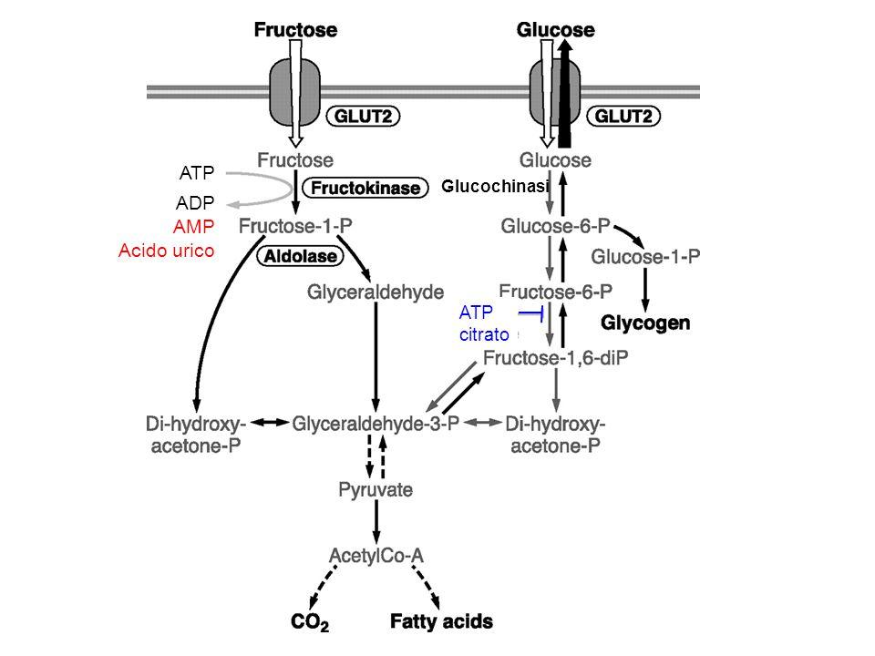 Differenze metaboliche fra Glu e Fru Manca regolazione ormonale dell'insulina (che agisce sulla glucochinasi) Manca regolazione allosterica della fosfofruttochinasi che sente lo stato energetico della cellula (inibizione a feedback da ATP e citrato) Rapido consumo di ATP con conseguente formazione di: - ACETIL-CoA - LATTATO - SINTESI ACIDI GRASSI e TRIGLICERIDI - LIPOPROTEINE VLDL e LDL - IPERURICEMIA (rischio gotta e calcoli renali) Implicazioni metaboliche e cardiovascolari.