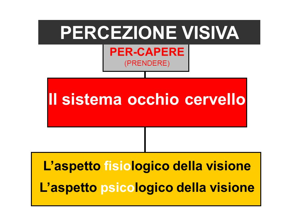 Il sistema occhio cervello PERCEZIONE VISIVA L'aspetto fisiologico della visione L'aspetto psicologico della visione PER-CAPERE (PRENDERE)