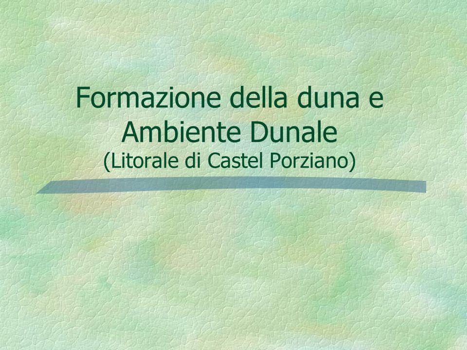 Formazione della duna e Ambiente Dunale (Litorale di Castel Porziano)