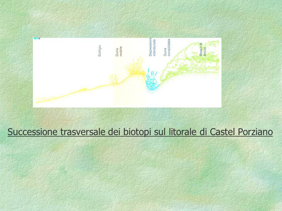 Successione trasversale dei biotopi sul litorale di Castel Porziano