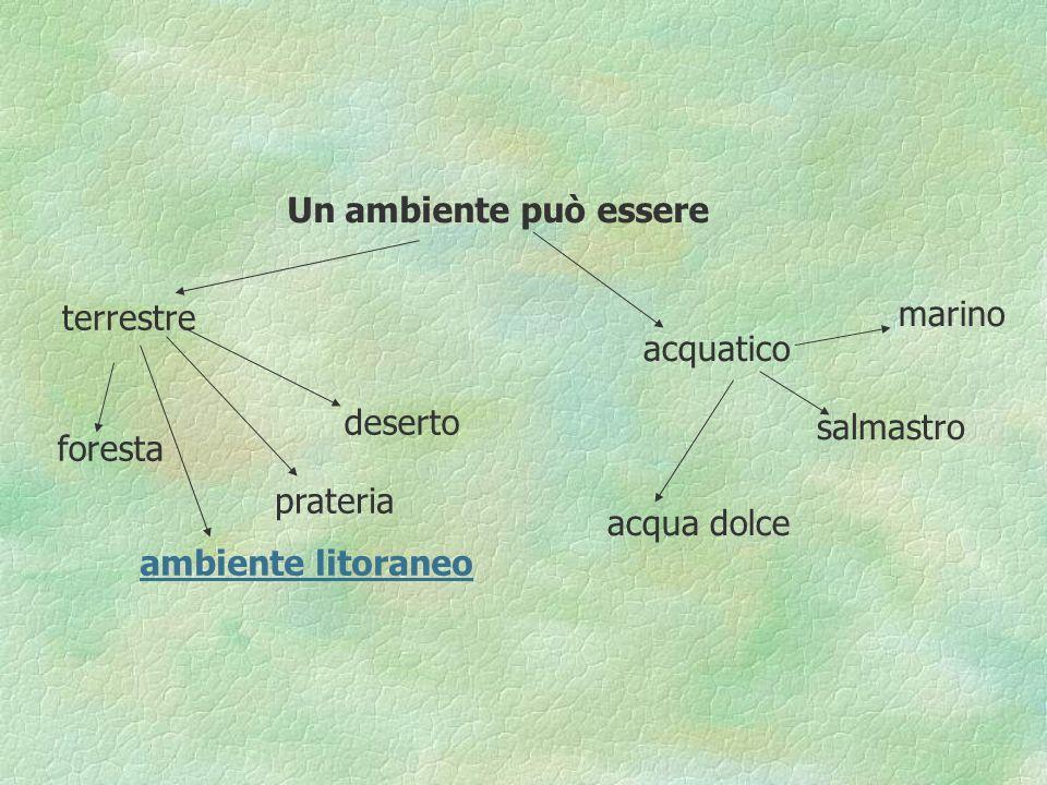 Un ambiente può essere terrestre acquatico foresta prateria deserto ambiente litoraneo marino salmastro acqua dolce