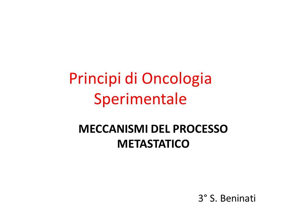 Principi di Oncologia Sperimentale MECCANISMI DEL PROCESSO METASTATICO 3° S. Beninati