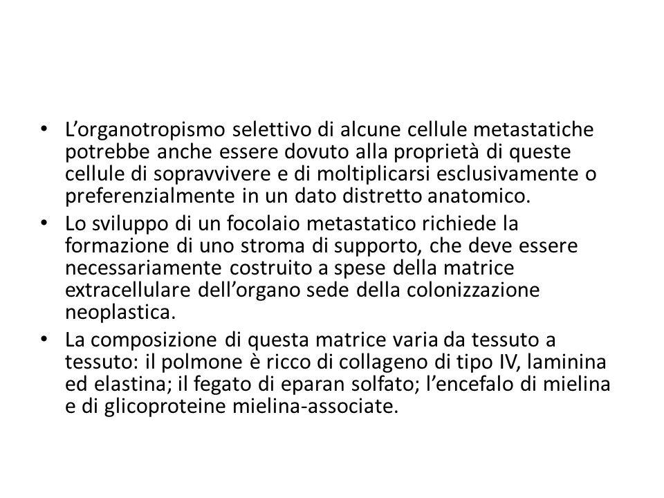 L'organotropismo selettivo di alcune cellule metastatiche potrebbe anche essere dovuto alla proprietà di queste cellule di sopravvivere e di moltiplic