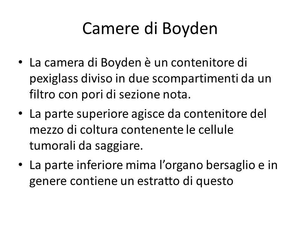 Camere di Boyden La camera di Boyden è un contenitore di pexiglass diviso in due scompartimenti da un filtro con pori di sezione nota. La parte superi