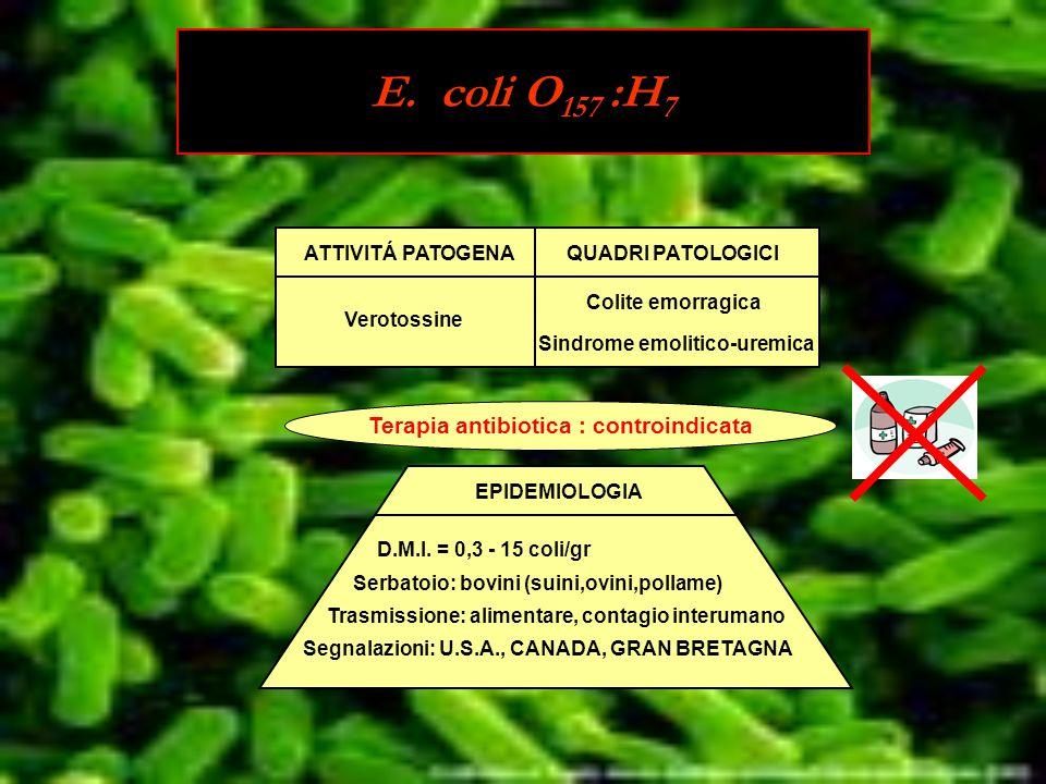 ATTIVITÁ PATOGENAQUADRI PATOLOGICI Verotossine Colite emorragica Sindrome emolitico-uremica Terapia antibiotica : controindicata EPIDEMIOLOGIA D.M.I.