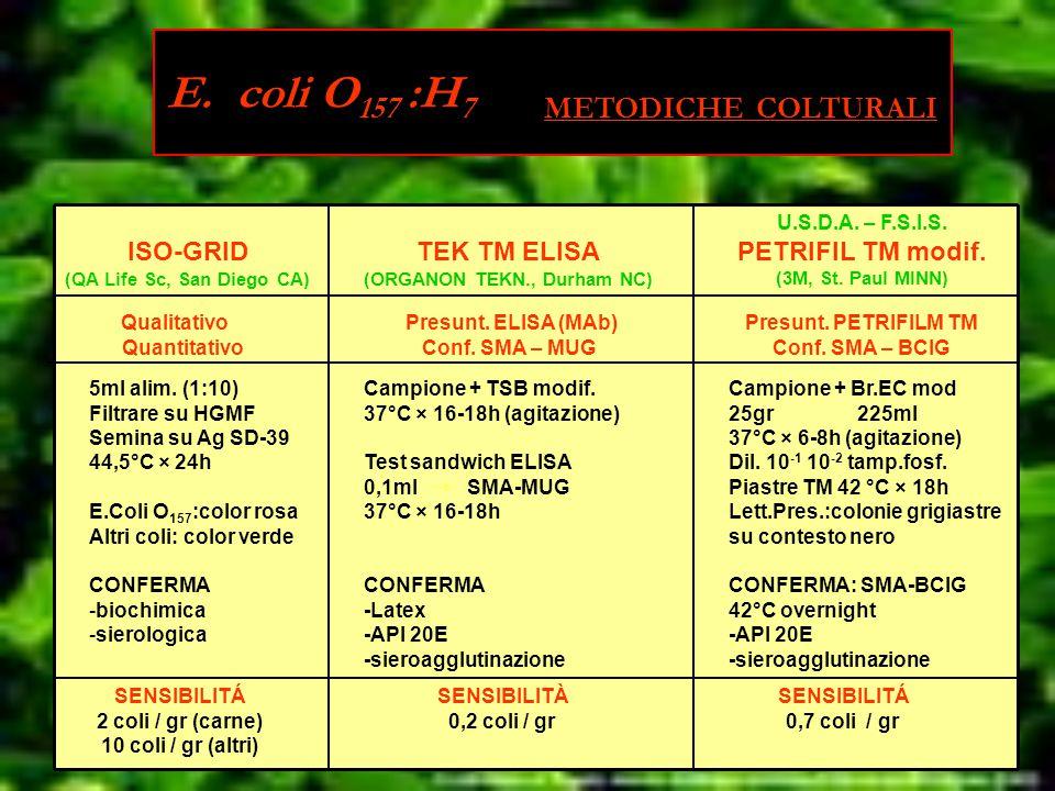 ISO-GRID (QA Life Sc, San Diego CA) TEK TM ELISA (ORGANON TEKN., Durham NC) U.S.D.A.