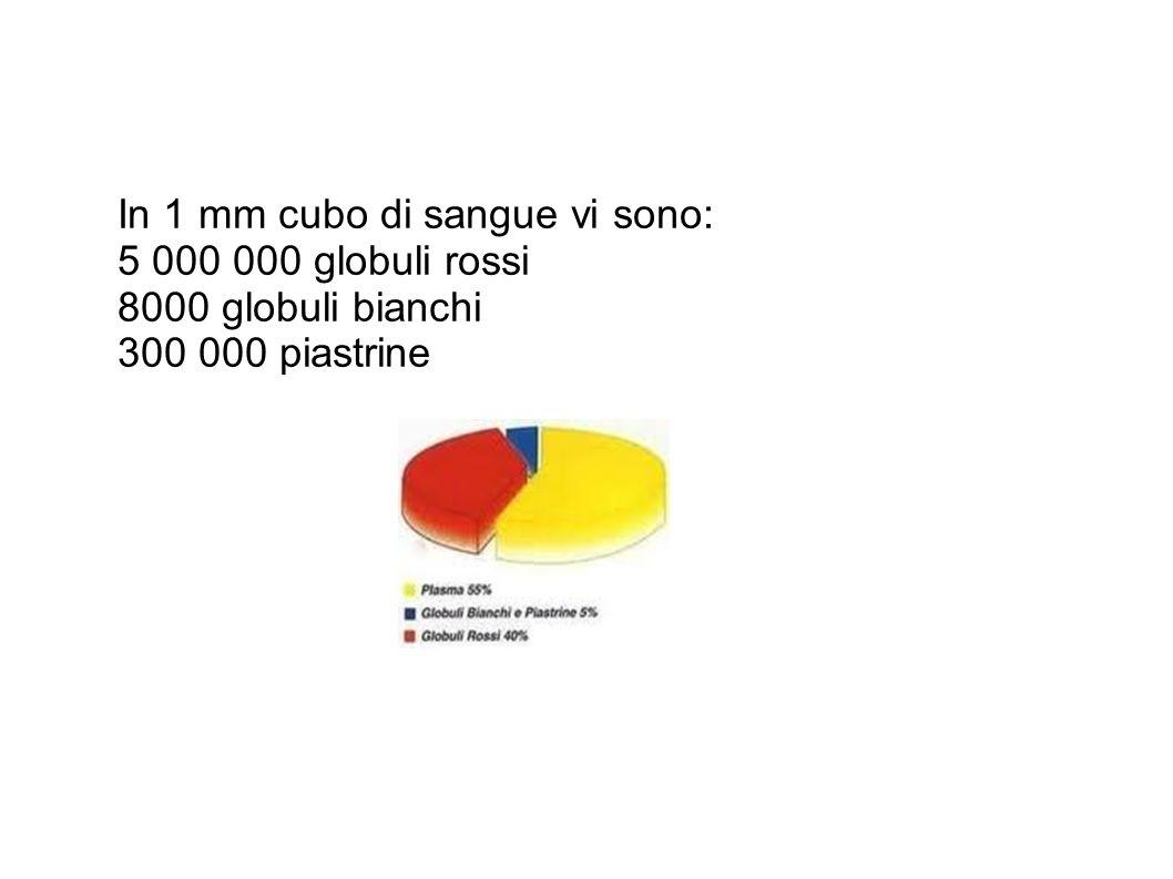 In 1 mm cubo di sangue vi sono: 5 000 000 globuli rossi 8000 globuli bianchi 300 000 piastrine