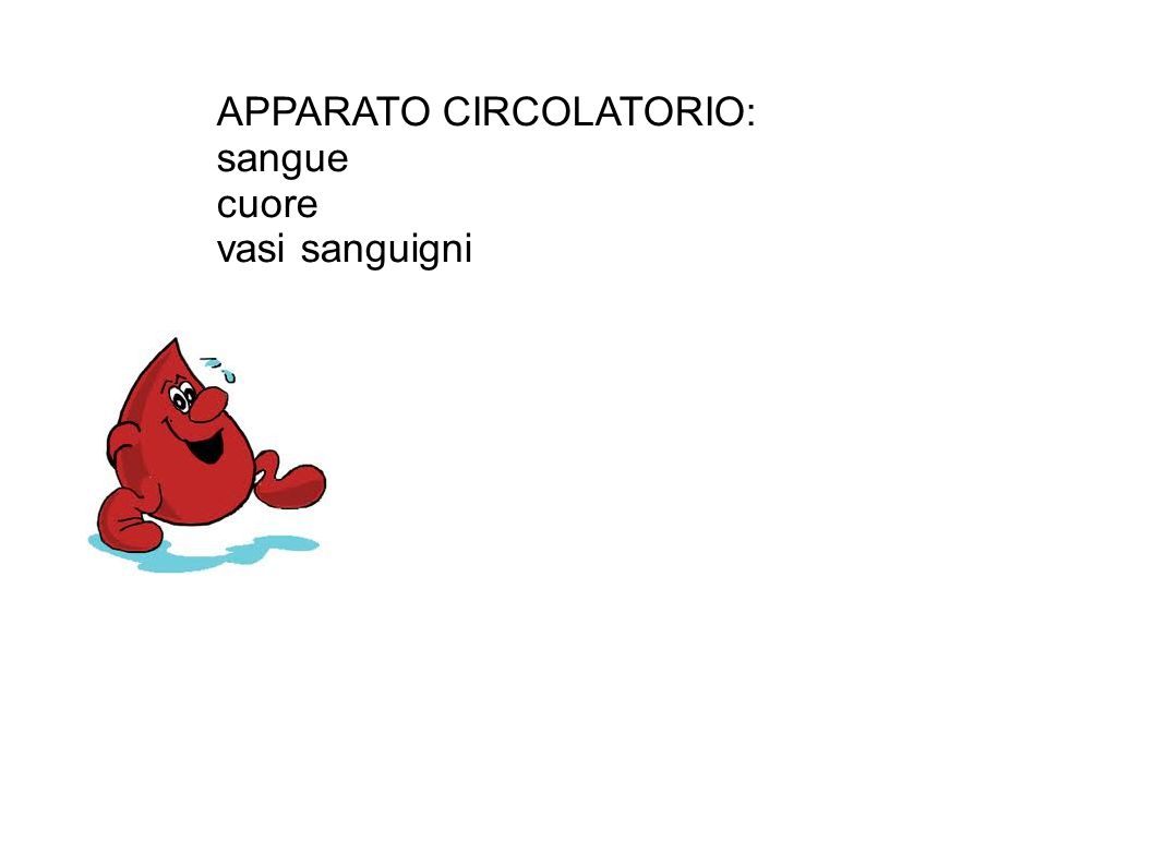 APPARATO CIRCOLATORIO: sangue cuore vasi sanguigni
