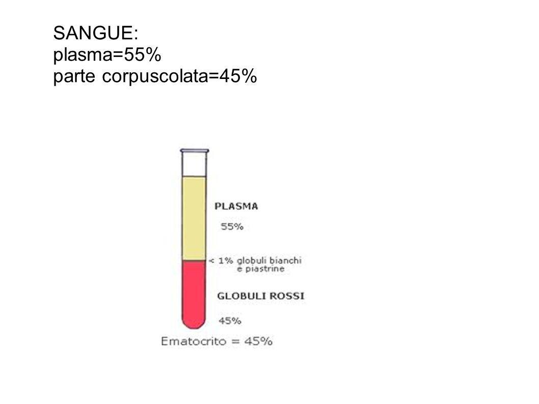 PLASMA: liquido giallo paglierino: 91% acqua 7% proteine 0,9% sali minerali 1,1% altre sostanze