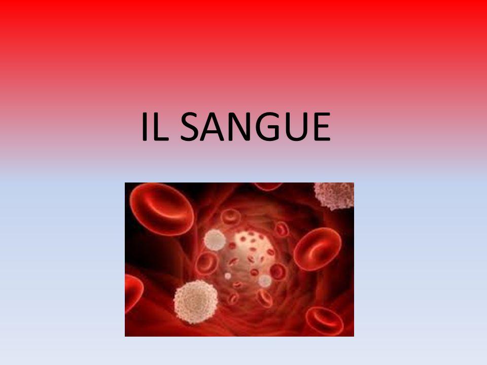 Le piastrine e la coagulazione Liberazione di Piastrine tromboplastina + Ca 2+ Attivazione Protrombina trombina Attivazione Fibrinogeno Fibrina