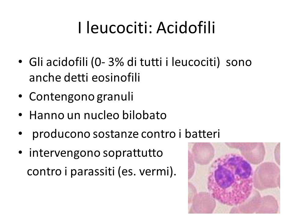 I leucociti: Acidofili Gli acidofili (0- 3% di tutti i leucociti) sono anche detti eosinofili Contengono granuli Hanno un nucleo bilobato producono so