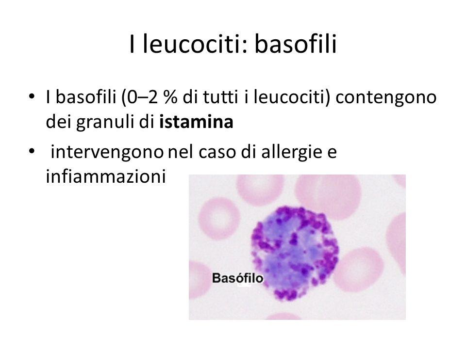 I leucociti: basofili I basofili (0–2 % di tutti i leucociti) contengono dei granuli di istamina intervengono nel caso di allergie e infiammazioni