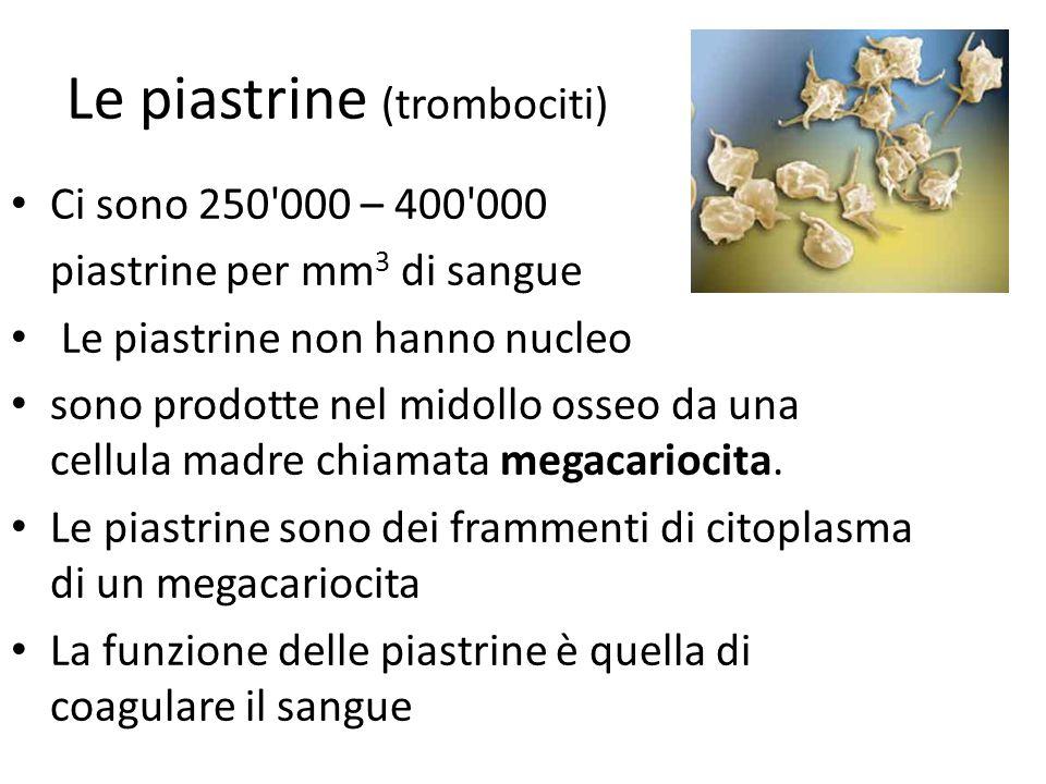 Le piastrine (trombociti) Ci sono 250 000 – 400 000 piastrine per mm 3 di sangue Le piastrine non hanno nucleo sono prodotte nel midollo osseo da una cellula madre chiamata megacariocita.