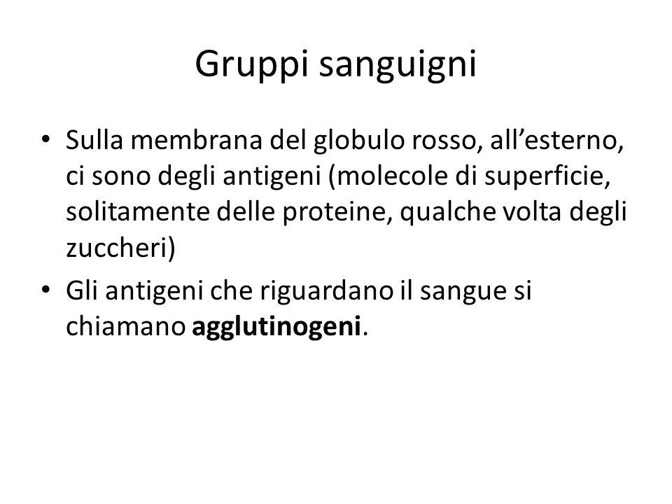 Gruppi sanguigni Sulla membrana del globulo rosso, all'esterno, ci sono degli antigeni (molecole di superficie, solitamente delle proteine, qualche volta degli zuccheri) Gli antigeni che riguardano il sangue si chiamano agglutinogeni.