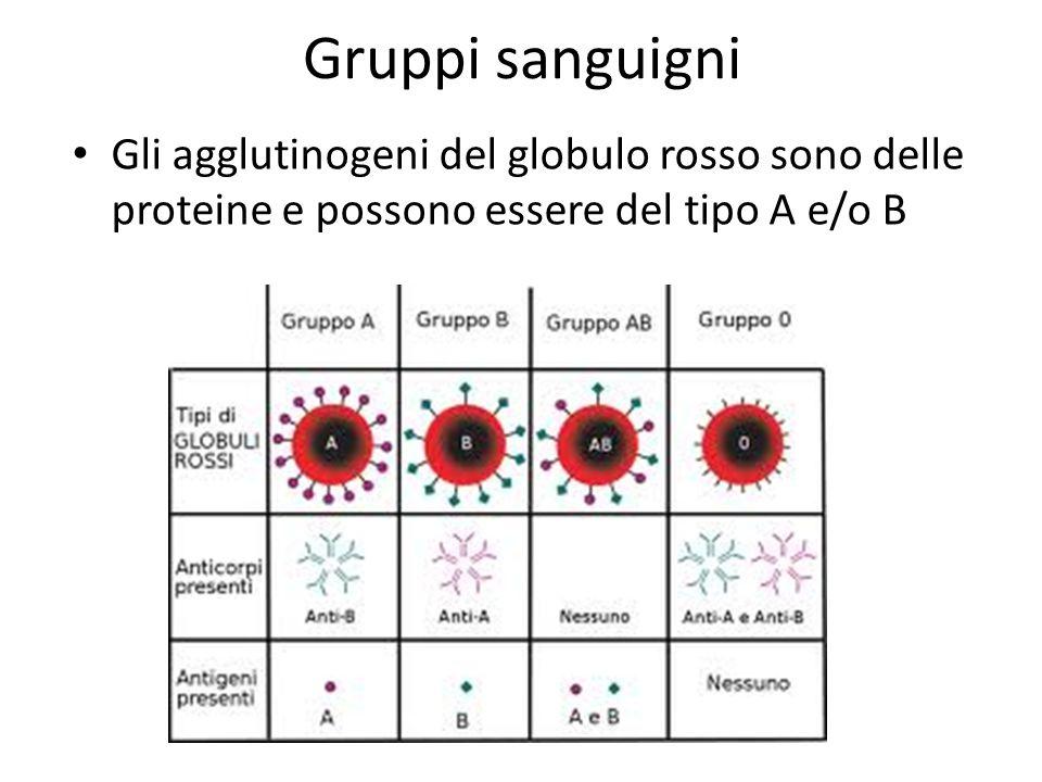 Gruppi sanguigni Gli agglutinogeni del globulo rosso sono delle proteine e possono essere del tipo A e/o B